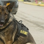 Client's Double K-9 Search Case Dismissed at Cook & Cook